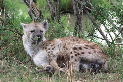Fotoalbum von Malindi.info - 3 Tage Safari Maasai Mara 2017 [ Foto 21 von 104 ]