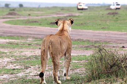 Fotoalbum von Malindi.info - 3 Tage Safari Maasai Mara 2017 [ Foto 30 von 104 ]