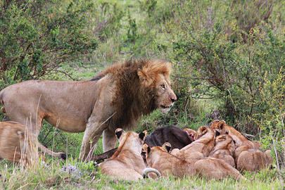 Fotoalbum von Malindi.info - 3 Tage Safari Maasai Mara 2017 [ Foto 33 von 104 ]