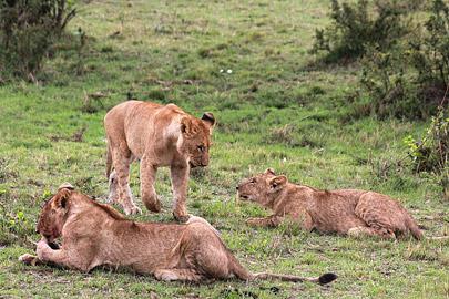 Fotoalbum von Malindi.info - 3 Tage Safari Maasai Mara 2017 [ Foto 34 von 104 ]