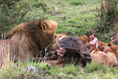 Fotoalbum von Malindi.info - 3 Tage Safari Maasai Mara 2017 [ Foto 36 von 104 ]
