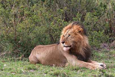 Fotoalbum von Malindi.info - 3 Tage Safari Maasai Mara 2017 [ Foto 38 von 104 ]