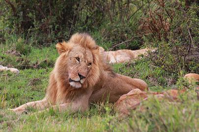 Fotoalbum von Malindi.info - 3 Tage Safari Maasai Mara 2017 [ Foto 45 von 104 ]
