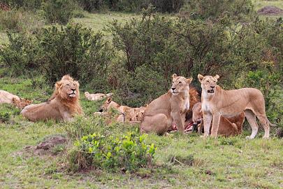 Fotoalbum von Malindi.info - 3 Tage Safari Maasai Mara 2017 [ Foto 46 von 104 ]