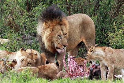Fotoalbum von Malindi.info - 3 Tage Safari Maasai Mara 2017 [ Foto 47 von 104 ]