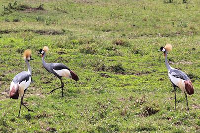 Fotoalbum von Malindi.info - 3 Tage Safari Maasai Mara 2017 [ Foto 53 von 104 ]