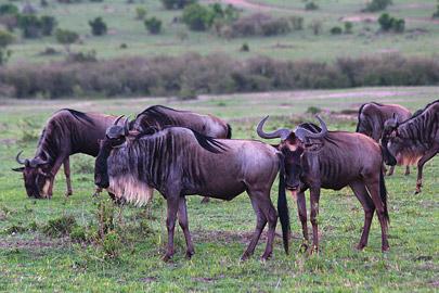 Fotoalbum von Malindi.info - 3 Tage Safari Maasai Mara 2017 [ Foto 69 von 104 ]