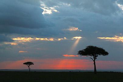Fotoalbum von Malindi.info - 3 Tage Safari Maasai Mara 2017 [ Foto 70 von 104 ]