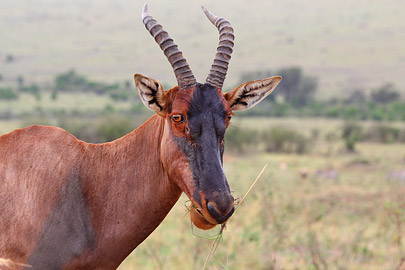 Fotoalbum von Malindi.info - 3 Tage Safari Maasai Mara 2017 [ Foto 76 von 104 ]