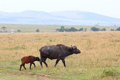Fotoalbum von Malindi.info - 3 Tage Safari Maasai Mara 2017 [ Foto 87 von 104 ]