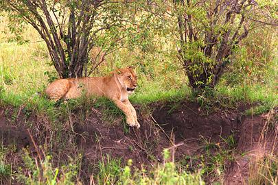Fotoalbum von Malindi.info - 3 Tage Safari Maasai Mara 2017 [ Foto 91 von 104 ]
