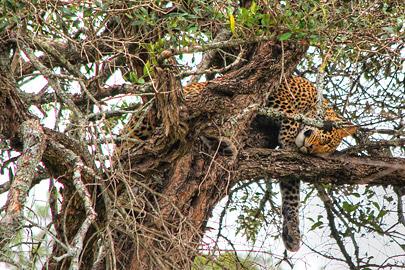 Fotoalbum von Malindi.info - 3 Tage Safari Maasai Mara 2017 [ Foto 92 von 104 ]