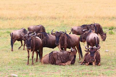 Fotoalbum von Malindi.info - 3 Tage Safari Maasai Mara 2017 [ Foto 98 von 104 ]