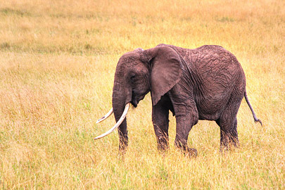 Fotoalbum von Malindi.info - 3 Tage Safari Maasai Mara 2017 [ Foto 99 von 104 ]