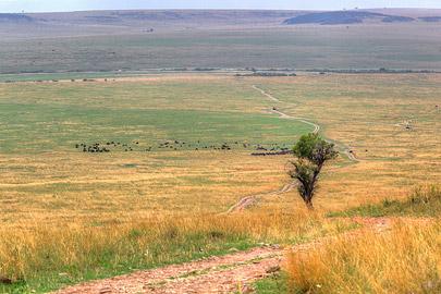 Fotoalbum von Malindi.info - 3 Tage Safari Maasai Mara 2017 [ Foto 101 von 104 ]