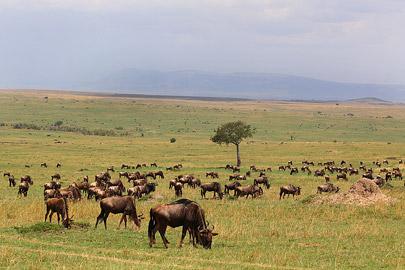 Fotoalbum von Malindi.info - 3 Tage Safari Maasai Mara 2017 [ Foto 103 von 104 ]