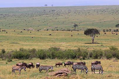 Fotoalbum von Malindi.info - 3 Tage Safari Maasai Mara 2017 [ Foto 104 von 104 ]