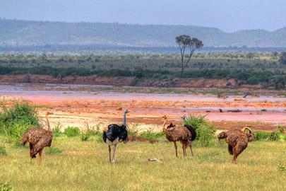 Fotoalbum von Malindi.info - 4 Tage Safari 2018 - Tsavo East, West & Amboseli[ Foto 1 von 102 ]