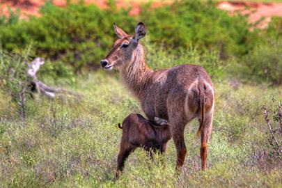 Fotoalbum von Malindi.info - 4 Tage Safari 2018 - Tsavo East, West & Amboseli[ Foto 3 von 102 ]