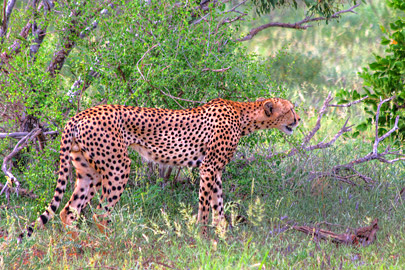 Fotoalbum von Malindi.info - 4 Tage Safari 2018 - Tsavo East, West & Amboseli[ Foto 5 von 102 ]