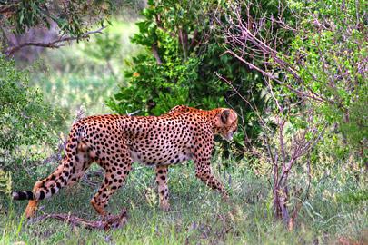 Fotoalbum von Malindi.info - 4 Tage Safari 2018 - Tsavo East, West & Amboseli[ Foto 6 von 102 ]