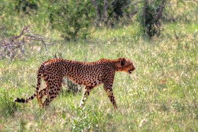 Fotoalbum von Malindi.info - 4 Tage Safari 2018 - Tsavo East, West & Amboseli[ Foto 7 von 102 ]