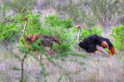 Fotoalbum von Malindi.info - 4 Tage Safari 2018 - Tsavo East, West & Amboseli[ Foto 14 von 102 ]