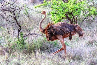 Fotoalbum von Malindi.info - 4 Tage Safari 2018 - Tsavo East, West & Amboseli[ Foto 15 von 102 ]