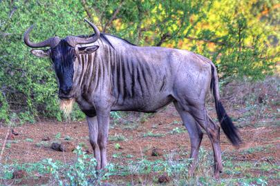 Fotoalbum von Malindi.info - 4 Tage Safari 2018 - Tsavo East, West & Amboseli[ Foto 21 von 102 ]