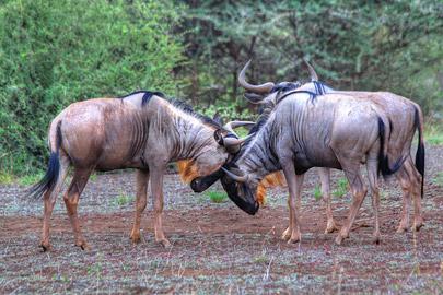 Fotoalbum von Malindi.info - 4 Tage Safari 2018 - Tsavo East, West & Amboseli[ Foto 22 von 102 ]