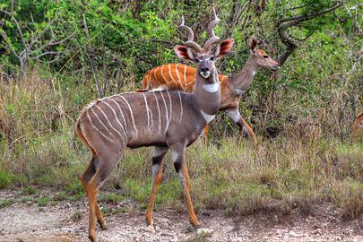 Fotoalbum von Malindi.info - 4 Tage Safari 2018 - Tsavo East, West & Amboseli[ Foto 24 von 102 ]