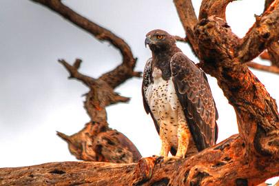 Fotoalbum von Malindi.info - 4 Tage Safari 2018 - Tsavo East, West & Amboseli[ Foto 27 von 102 ]