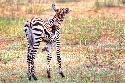 Fotoalbum von Malindi.info - 4 Tage Safari 2018 - Tsavo East, West & Amboseli[ Foto 44 von 102 ]