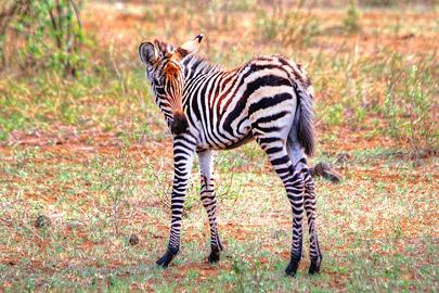 Fotoalbum von Malindi.info - 4 Tage Safari 2018 - Tsavo East, West & Amboseli[ Foto 45 von 102 ]
