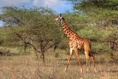 Fotoalbum von Malindi.info - 4 Tage Safari 2018 - Tsavo East, West & Amboseli[ Foto 46 von 102 ]