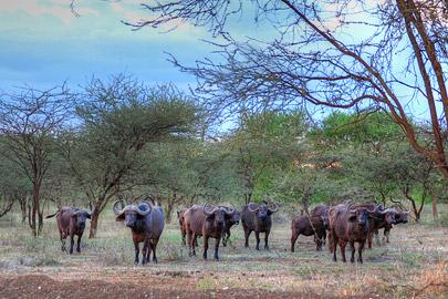 Fotoalbum von Malindi.info - 4 Tage Safari 2018 - Tsavo East, West & Amboseli[ Foto 50 von 102 ]