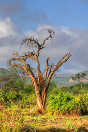 Fotoalbum von Malindi.info - 4 Tage Safari 2018 - Tsavo East, West & Amboseli[ Foto 51 von 102 ]