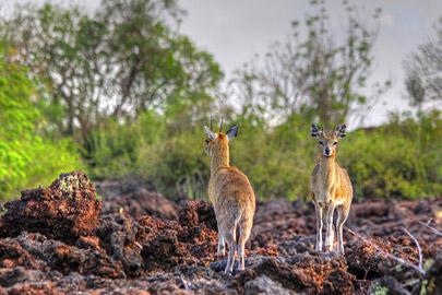 Fotoalbum von Malindi.info - 4 Tage Safari 2018 - Tsavo East, West & Amboseli[ Foto 55 von 102 ]