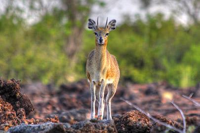 Fotoalbum von Malindi.info - 4 Tage Safari 2018 - Tsavo East, West & Amboseli[ Foto 56 von 102 ]