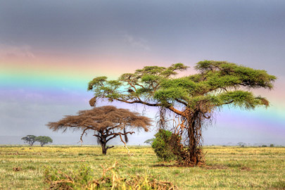 Fotoalbum von Malindi.info - 4 Tage Safari 2018 - Tsavo East, West & Amboseli[ Foto 60 von 102 ]
