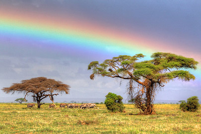 Fotoalbum von Malindi.info - 4 Tage Safari 2018 - Tsavo East, West & Amboseli[ Foto 64 von 102 ]