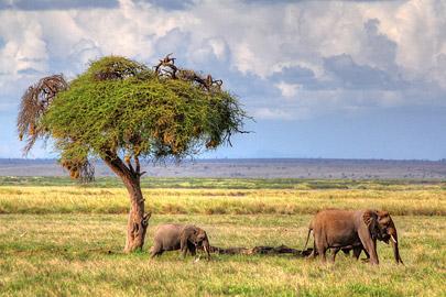 Fotoalbum von Malindi.info - 4 Tage Safari 2018 - Tsavo East, West & Amboseli[ Foto 66 von 102 ]