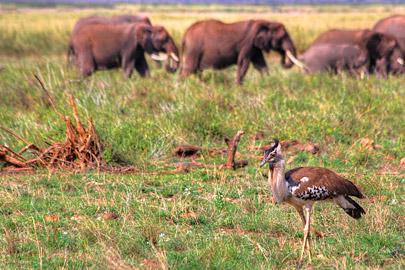 Fotoalbum von Malindi.info - 4 Tage Safari 2018 - Tsavo East, West & Amboseli[ Foto 68 von 102 ]