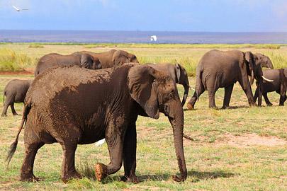 Fotoalbum von Malindi.info - 4 Tage Safari 2018 - Tsavo East, West & Amboseli[ Foto 69 von 102 ]