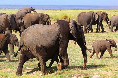 Fotoalbum von Malindi.info - 4 Tage Safari 2018 - Tsavo East, West & Amboseli[ Foto 70 von 102 ]
