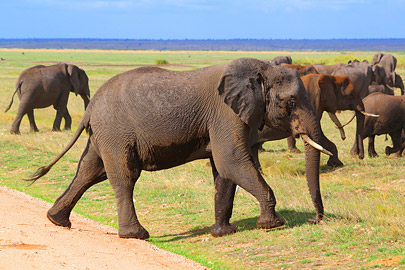 Fotoalbum von Malindi.info - 4 Tage Safari 2018 - Tsavo East, West & Amboseli[ Foto 71 von 102 ]