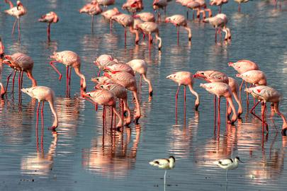 Fotoalbum von Malindi.info - 4 Tage Safari 2018 - Tsavo East, West & Amboseli[ Foto 74 von 102 ]