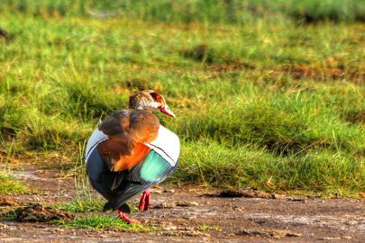 Fotoalbum von Malindi.info - 4 Tage Safari 2018 - Tsavo East, West & Amboseli[ Foto 78 von 102 ]