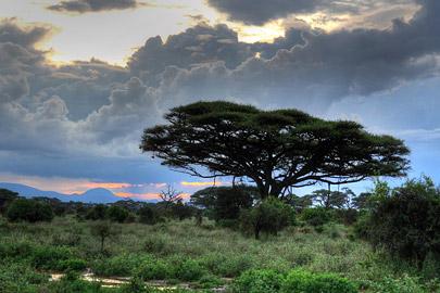 Fotoalbum von Malindi.info - 4 Tage Safari 2018 - Tsavo East, West & Amboseli[ Foto 79 von 102 ]