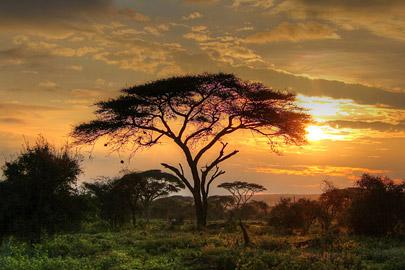 Fotoalbum von Malindi.info - 4 Tage Safari 2018 - Tsavo East, West & Amboseli[ Foto 81 von 102 ]